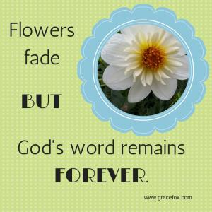 flowers fade