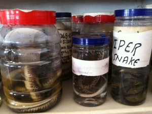 The mission hospital keeps jars with preserved snakes so villagers who have been bitten can identify the species that inflicted the wound and receive proper treatment.